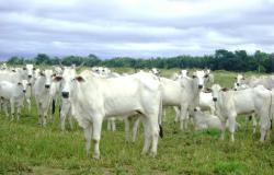 Noroeste de Mato Grosso tem parecer favorável para zona livre de febre aftosa sem vacinação
