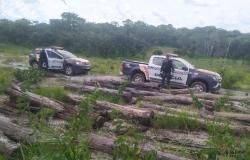 Sete homens são pegos extraindo madeiras de área indígena em Campinápolis