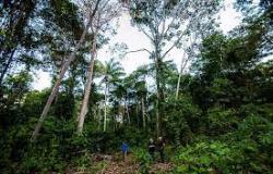 Certificação de manejo florestal atrai produtores e empresários