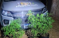 Cavalaria prende suspeito, porções de droga e plantas de Cannabis Sativa no Pirineu