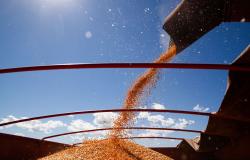 Conab prevê produção recorde de grãos na safra 2020/21 com destaque para Mato Grosso