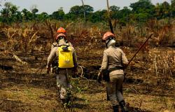 União entre instituições marca combate a incêndios florestais em 2019