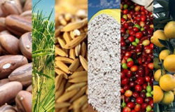 IBGE prevê safra recorde de grãos em 2020