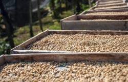 Após 2 meses de alta, preços do café caem em todos os grupos em janeiro, diz OIC