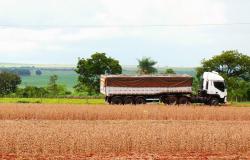 Grupo que atuava em fraudes com cargas de soja é desarticulado após tentativa de homicídio