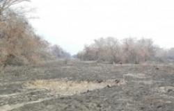 MT quase triplica registro de queimadas