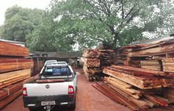 Dema e Sema apreendem 535 m³ de madeira serrada e multam madeireira em R$ 407 mil