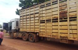 Caminhão e gado são localizados e dois suspeitos presos