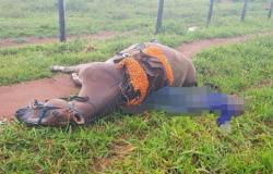 Homem morre após ser atingido por raio