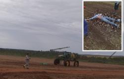 Funcionário de  fazenda morre eletrocutado em Diamantino