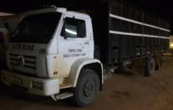 PM desarticula grupo especializado em roubo de gado