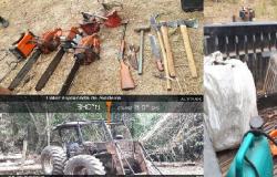PM acompanham servidores da Funai e encontram extração ilegal de madeira em terra indígena
