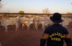 Polícia Civil recupera gado furtado de propriedade e investiga associação criminosa envolvida em furtos
