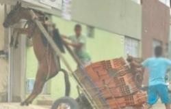 Burro fica suspenso em carroça com excesso de peso