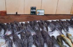 Batalhão Ambiental e Sema apreendem 135 quilos de pescado