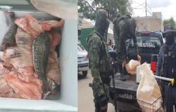 Batalhão Ambiental apreende 260 quilos de pescado irregular