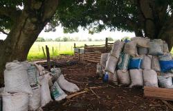 PM Ambiental fecha fábrica ilegal de carvão de coco de babaçu