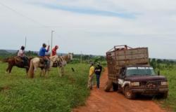 Ladrões Gado são  presos  em flagrante pela Polícia Civil