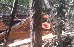 Operação em Nobres na Coqueiral apreende madeira ilegal, arma de fogo e drogas na