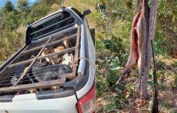 Policiais encontram cateto abatido e seis cães em gaiola; um dos suspeitos foi identificado