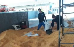 Polícia Civil recupera em Lucas do Rio Verde carga de 50 toneladas de milho