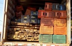 Polícia Civil apreende carga ilegal de madeira e prende suspeito