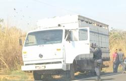 Dois homens são presos por furto de gado da Fazenda Jaraguá