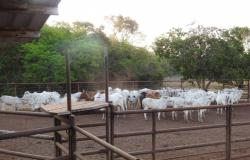 Polícia Civil recupera 105 cabeças de gado subtraídas de fazenda