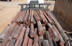 Suspeito por extração ilegal de madeira é preso