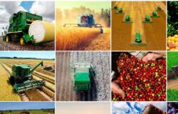 Agricultura latino-americana atrai grandes players globais