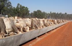 Confinamento bovino cresce 5% em 2019, para 3,57 milhões de animais, diz Assocon