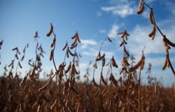 Safra de soja do Brasil é estimada em recorde de 122,7 mi t, aponta pesquisa da Reuters