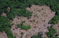 Número de multas aplicadas pelo Ibama em 2019 é o menor em 15 anos, diz relatório do Observatório do Clima