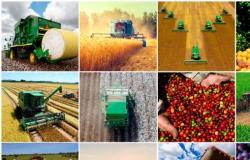 VBP: Valor Bruto da Produção Agropecuária de 2019 é estimado em R$ 617 bilhões