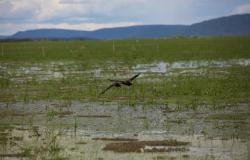 Intervenções dão resultado e volume de água na planície da Baía de Chacororé aumenta