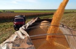 Seca afetou boa parte do milho de Mato Grosso, diz presidente da Aprosoja-MT