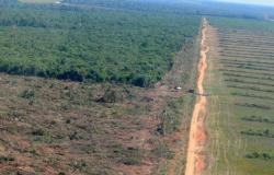 Publicados Decretos que auxiliam no Plano de Combate ao Desmatamento