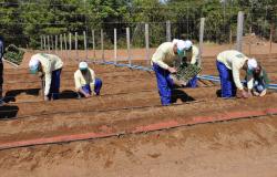 Produção de horta em penitenciária é comercializada com indústria de conservas