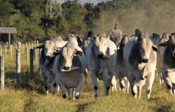 Produção de carne gerará mais receita em 2018 no MT