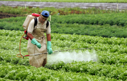 Câmara debate projeto que simplifica lei de controle dos agrotóxicos