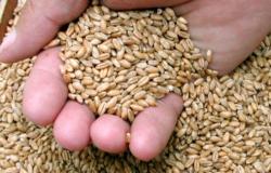 Falta de trigo na Argentina é oportunidade para o Brasil