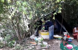 Sema apreende 100 kg de pescado irregular no Teles Pires