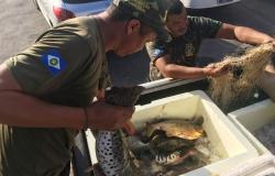 Fiscais da Sema apreendem 65 kg de pescado irregular em Santo Antônio de Leverger