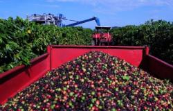 Agricultura quer prorrogar linhas de financiamento do Funcafé