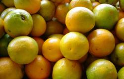 Volume de suco de laranja exportado aos EUA sobe 69% e beira recorde