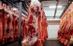 Exportações Mato-Grossenses de carne bovina despencam e atingem pior resultado em seis anos