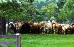Pecuária brasileira poderia gerar R$ 32 bi/ano em receita adicional se tivesse melhor produtividade