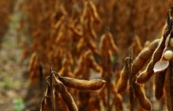 Mato Grosso atingiu produtividades recordes de soja em todas as regiões