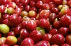 Índia reduz em 10% previsão de safra de café 2017/18
