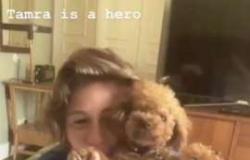 Assistente de Katy Perry salva vida de cachorra da cantora